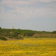 Torre di Eloro - Cuori Giovani